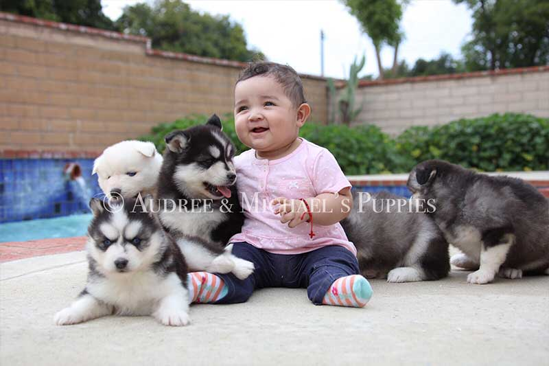 husky-kid